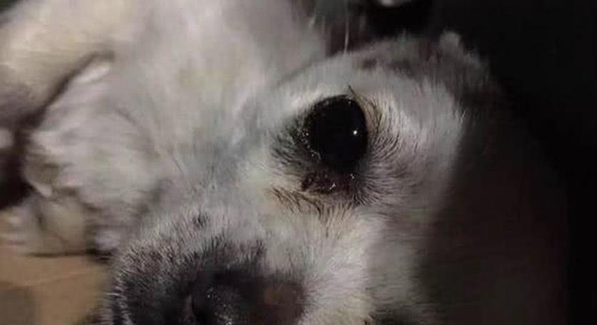 流浪狗生病虚弱不堪,好心人带去治疗,回来后狗狗的行为让她感动