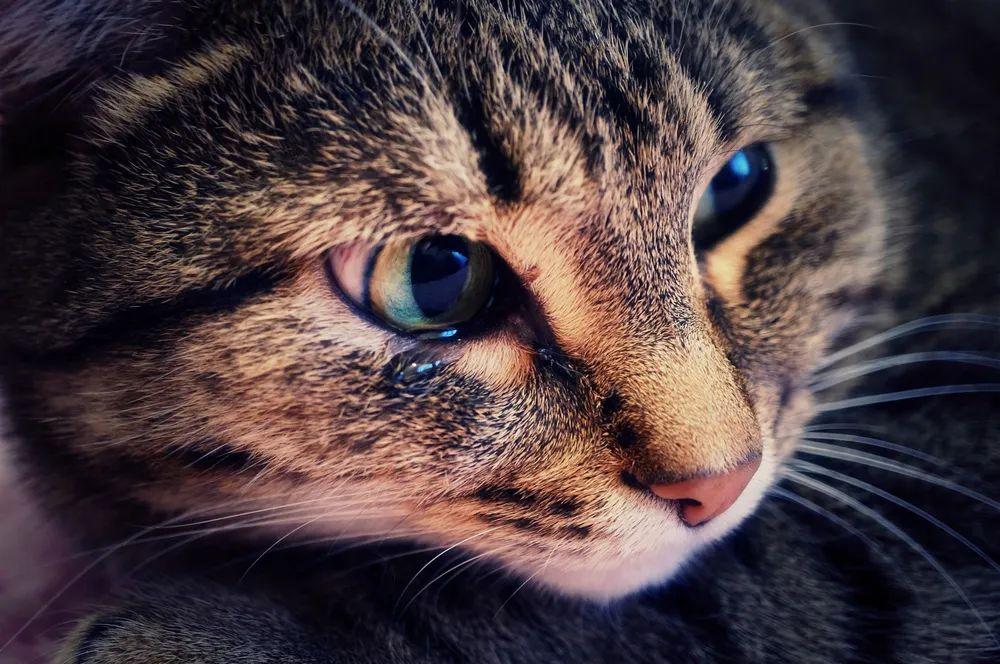 猫:我尿血了,而你却看不见