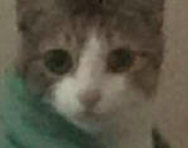网友起床没叫猫咪,它醒来后就坐在床上诘责主人:为什么不叫我!