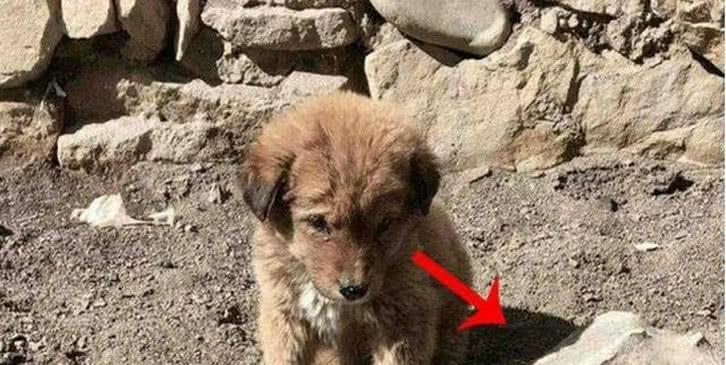 狗狗妈妈因病离世,小狗狗守着妈妈遗体,小狗狗好可怜!