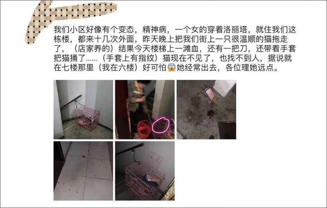 广州Lo娘偷猫残忍虐杀,邻人反映另有其他恐怖行为!