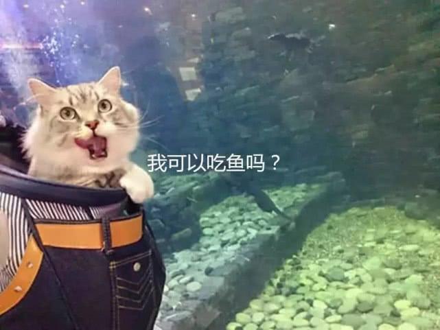 猫咪逛水族馆时,兴奋的一直喵喵叫:铲屎的,快去给本喵捉几条