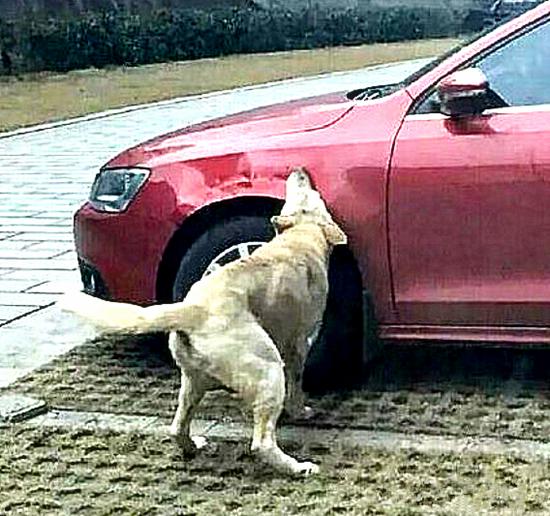 原创 流浪狗讨食被男子拒绝,隔天去上班发现竟被抨击了:你们是土匪吗