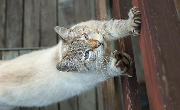 猫咪不磨爪子是不可能的,该若何保护好自己的家具和墙壁?