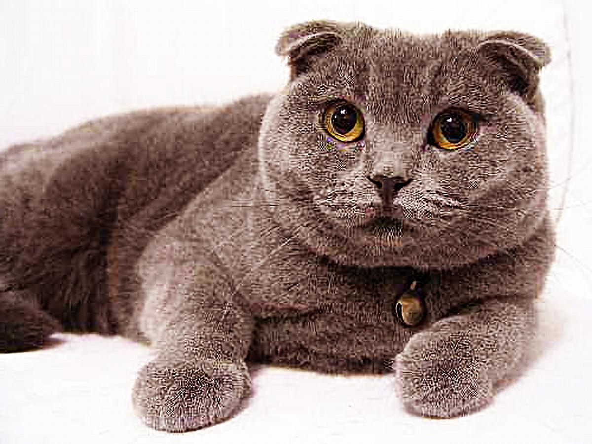 原创 疫情封城,猫咪被困快要60天,邻人的1个电话,让主人泣如雨下!