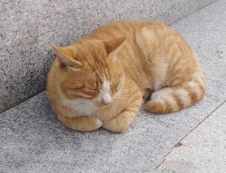 铲屎官抱宠物猫散步,却遭落难猫围观,橘猫:可以抱抱我吗?