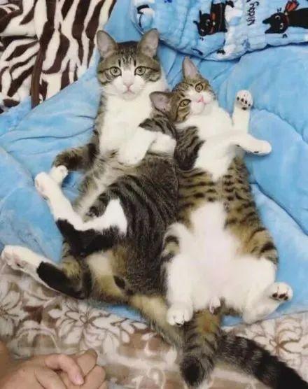 即将被安乐死的猫咪,没想到竟靠撞脸救了自己。