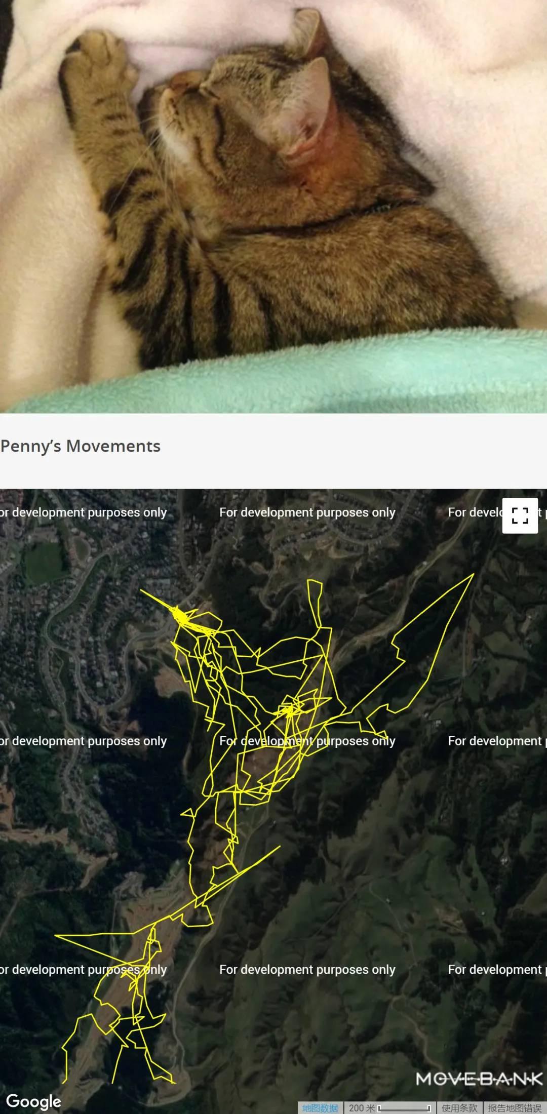 追踪1000只神出鬼没的家猫