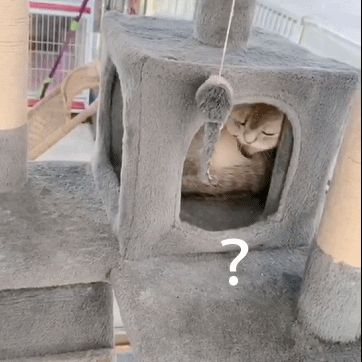 """""""一只猫能长到哪去啊…对不起,打扰了!"""""""