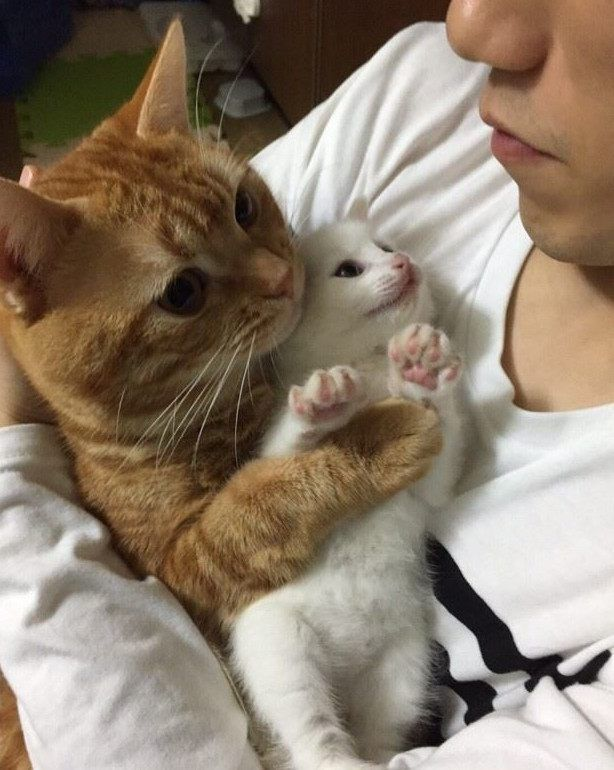 小猫刚到新家就被熊抱,肥橘抱着就不愿撒手,小奶猫一脸懵!