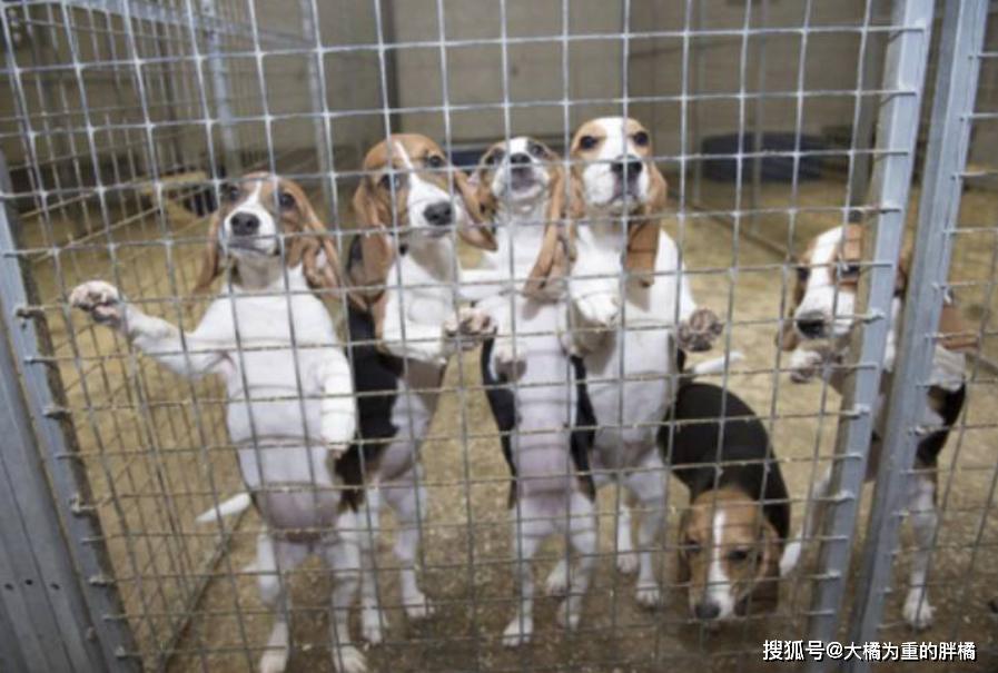原创 养狗就别丢狗,这6种狗狗被弃养了太多,土狗:我为啥不能进城?