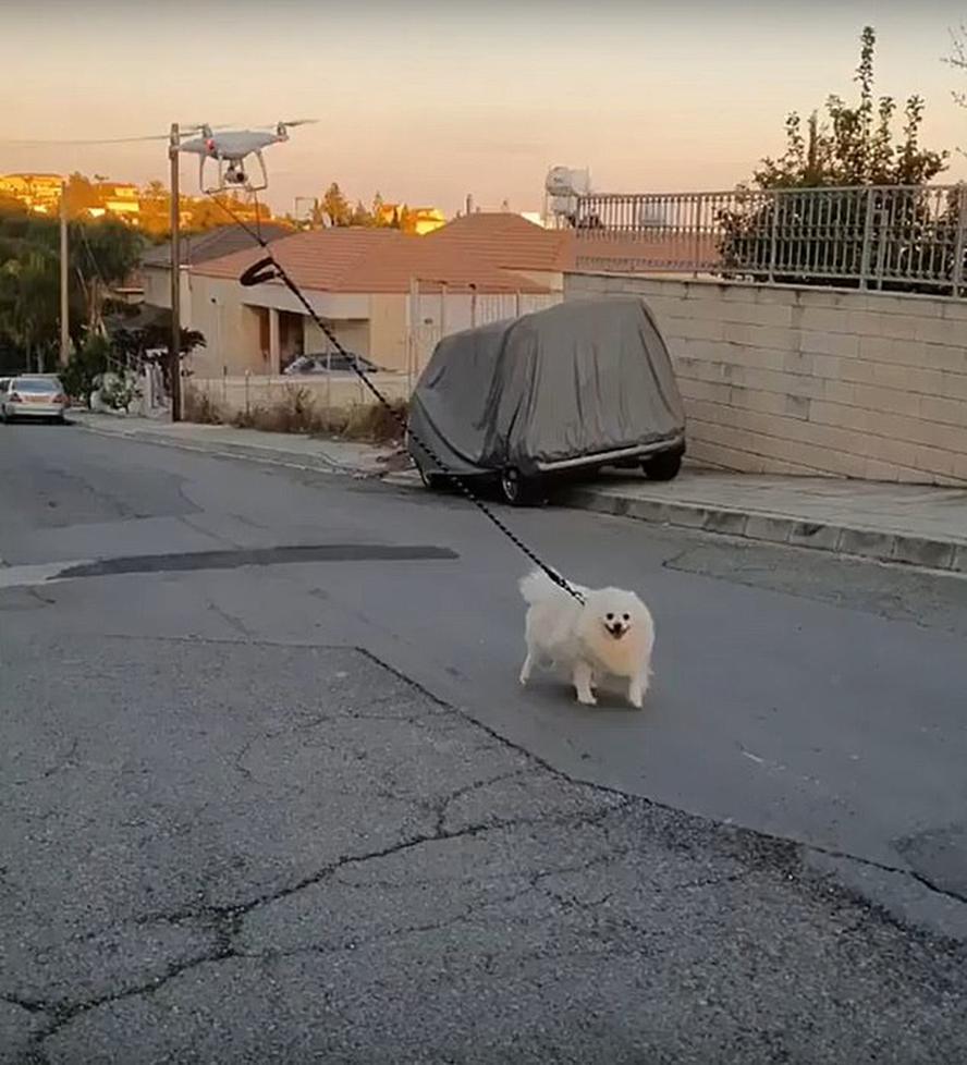 塞浦路斯一男子用无人机远程遛狗称不要忘了狗狗的快乐