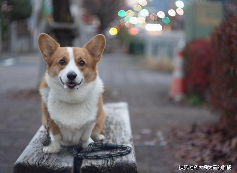 """原创 这5种狗狗很适合女生喂养,颜值高还不折腾,切忌""""跟风""""养狗!"""