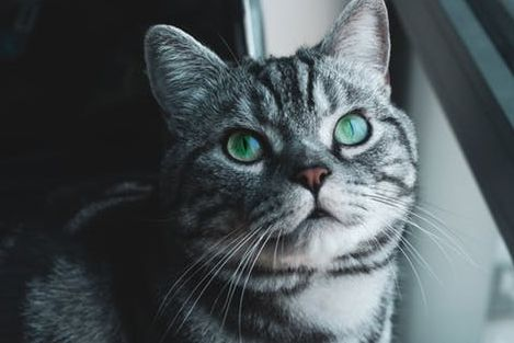 猫咪得了毛球症怎么办?