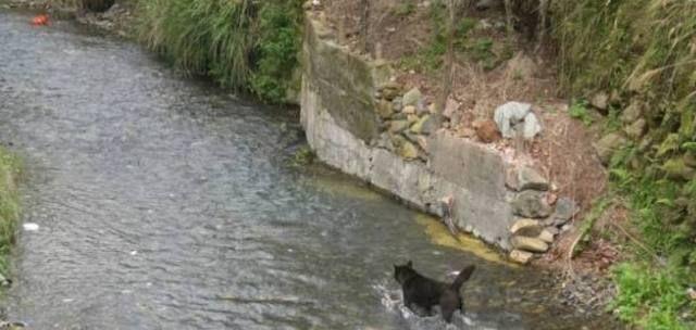 狗狗下河捉鱼,捉上来一个新鲜的器械,主人一看喜悦坏了!