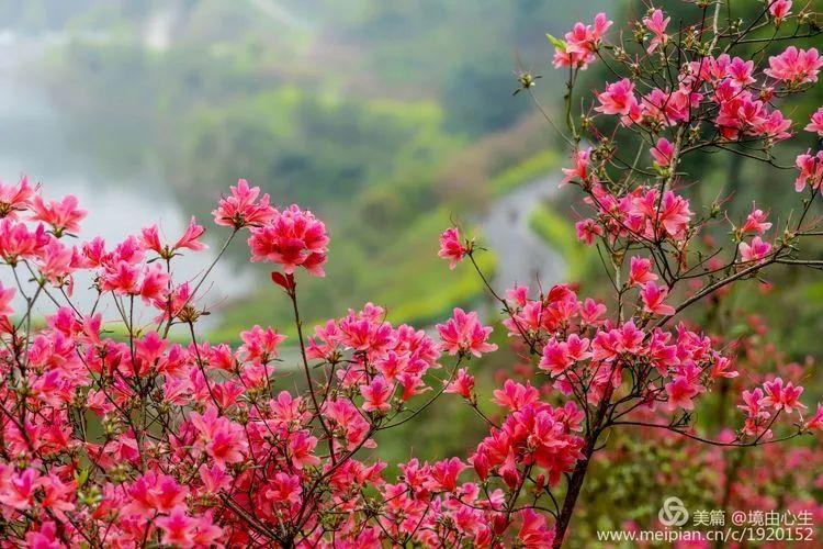 萍乡常住人口每年_萍乡话人口