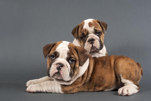 """原创 """"智商感人""""的6大狗狗,劝你最好别养,否则可能要哭了"""
