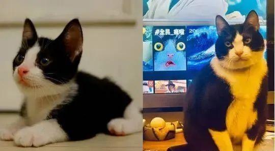 小萌猫小时候是个美萌帅哥,6年后......岁月是一把杀喵刀!