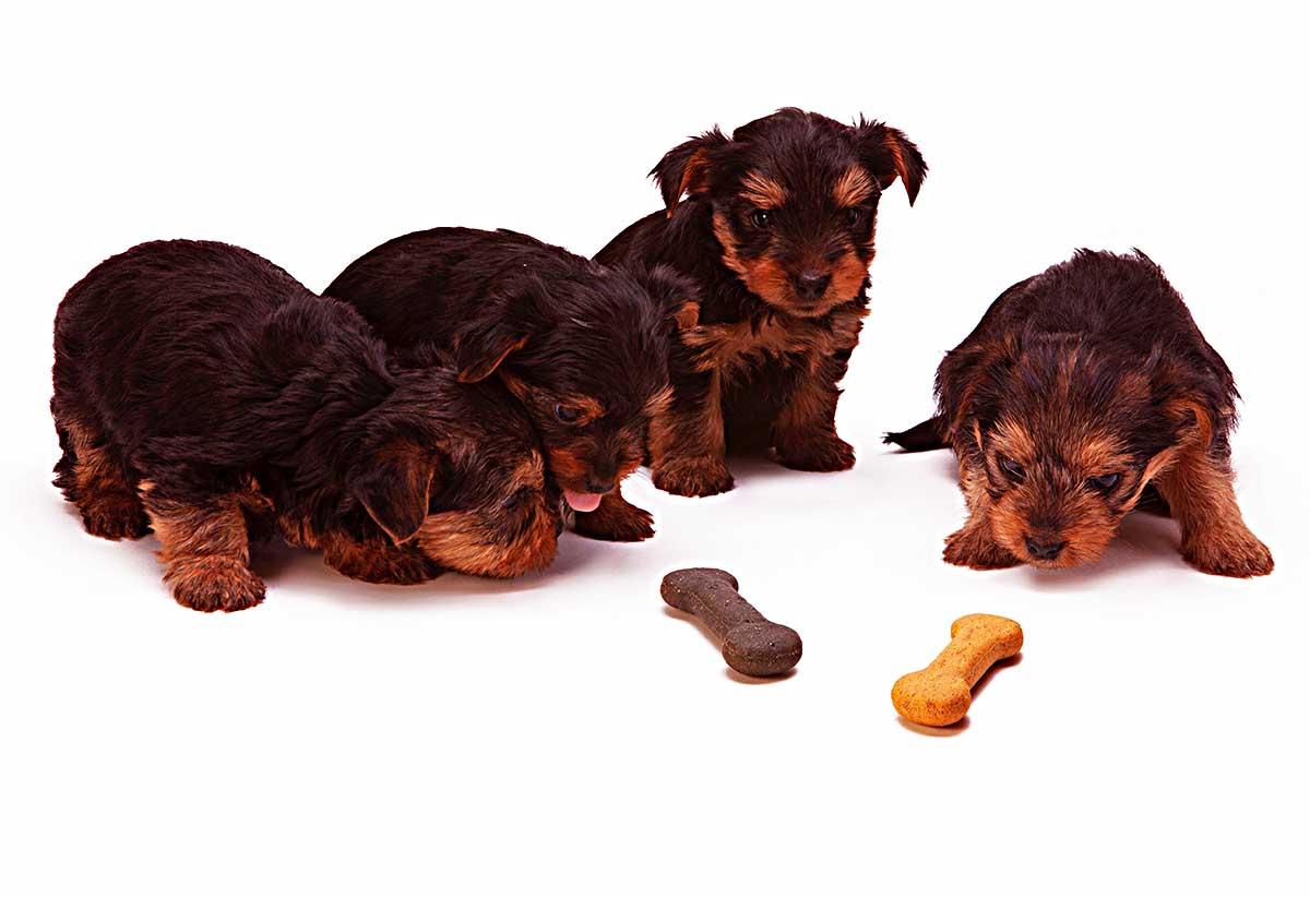 原创 很多人喜欢给狗狗吃干果弥补营养,这样对吗?小心害了它!
