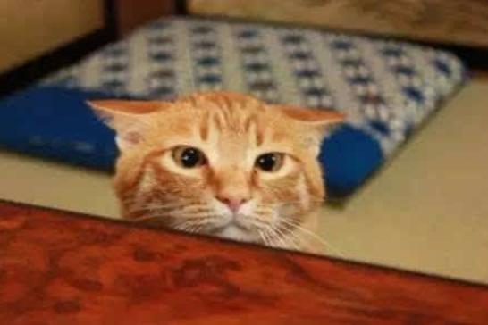 """猫盯着墙或者天花板,发出""""咔咔咔""""的声音,真的看到了什么吗?"""