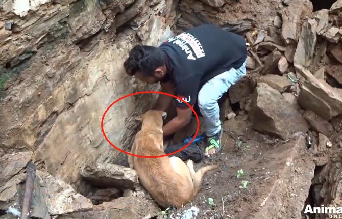 """原创 狗妈向路人""""求助"""",显示得很着急的样子,狗:救下孩子吧"""
