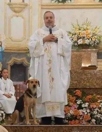 狗狗在教堂走道上呼呼大睡,神父的行为获得许多人赞赏!