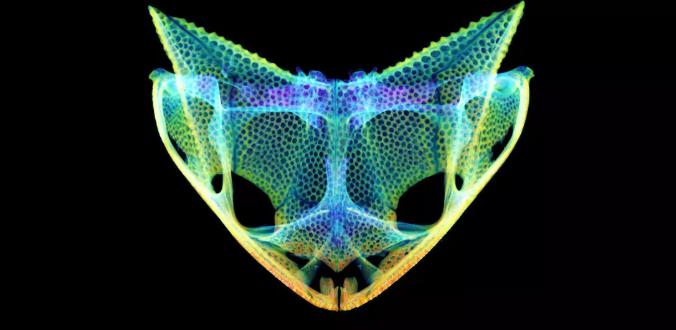"""研究发现田鸡进化出带有隐藏""""尖牙""""和角的不寻常头骨"""