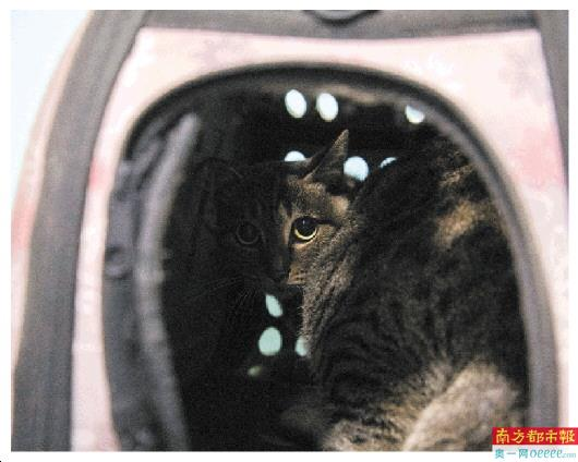 主人滞留外地宠物断粮 志愿者上门救助暖人心