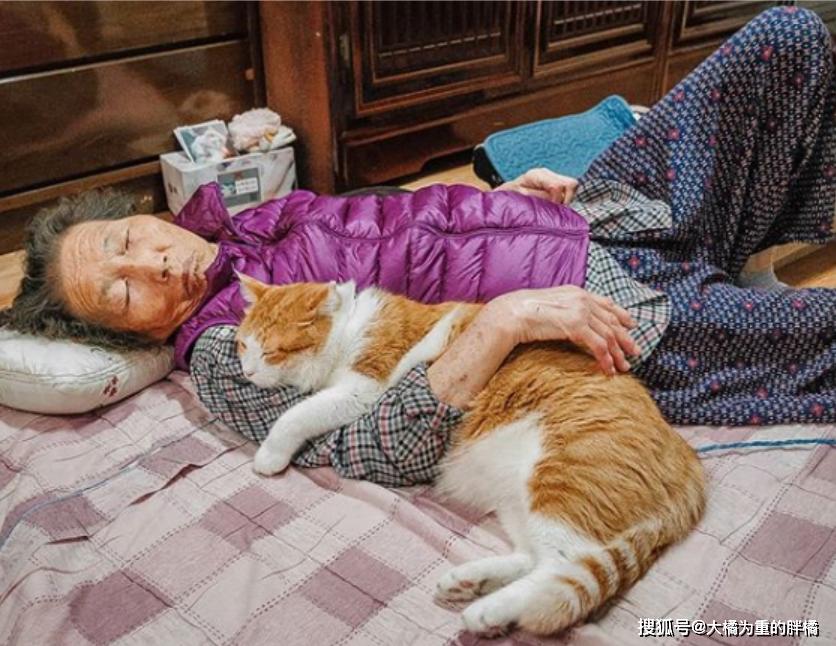 """原创 奶奶家来了一只橘猫,天天撒娇讨饭吃,""""祖孙俩""""过得清淡却温馨"""