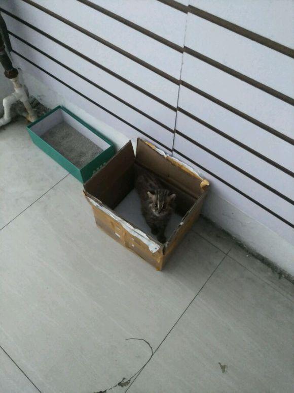 """从同伙手中吸收一只""""小猫"""",带去宠物店时被老板要求放生"""