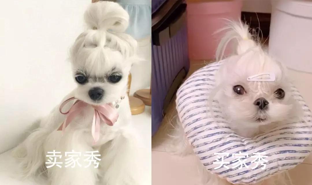 原创 活的不如狗就算了,现在连头发都比不上狗了!