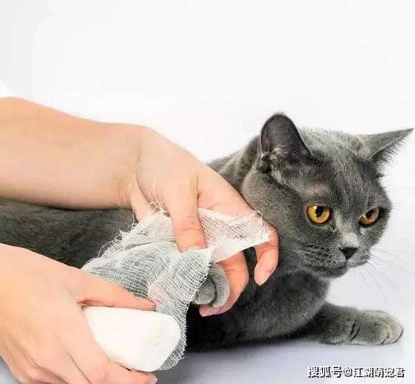 原创 为什么有时候摸猫咪,它会忽然间翻脸咬人?缘故原由有5个