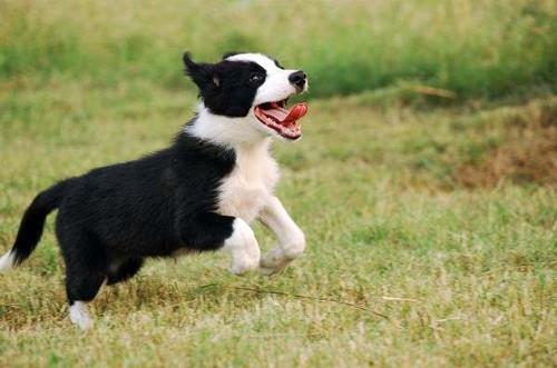 原创 【小我私家养狗履历分享】幼犬炎天没食欲吃什么,幼犬炎天食欲欠好吃什么