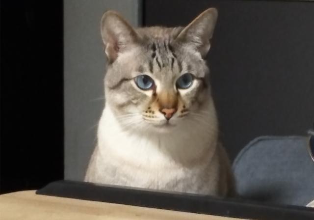 原创 有些设定一旦接受就无法改变:铲屎官发现猫咪脸上竟藏有其他动物