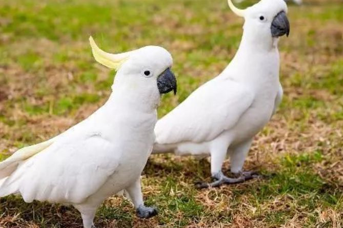 这4种人不适合养大型鹦鹉,养了准悔恨,别感动,今天知道不晚