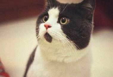 主人让猫咪充当手机支架,猫咪一脸委屈逗笑网友!