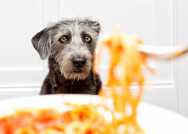 原创 有这5大显示,说明狗狗已经被惯坏了,再不改就会有贫苦