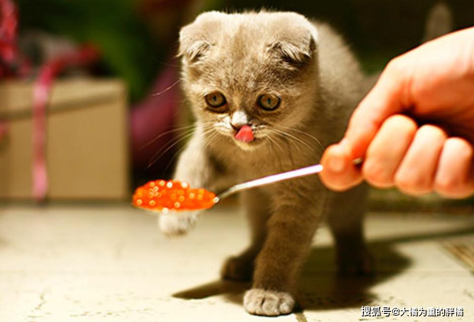 """原创 猫咪""""吐逆""""不是小事,急性吐逆最贫苦,咱找出了12个触发缘故原由"""