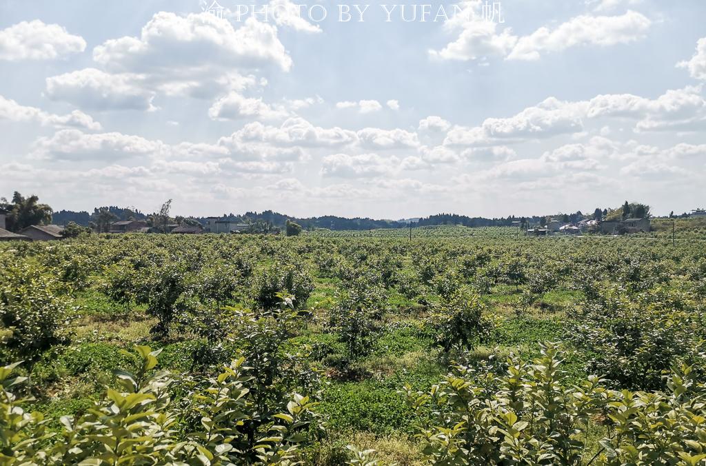 航拍重庆潼南第一镇,中国柠檬之都的最大柠檬基地,你知道是哪?