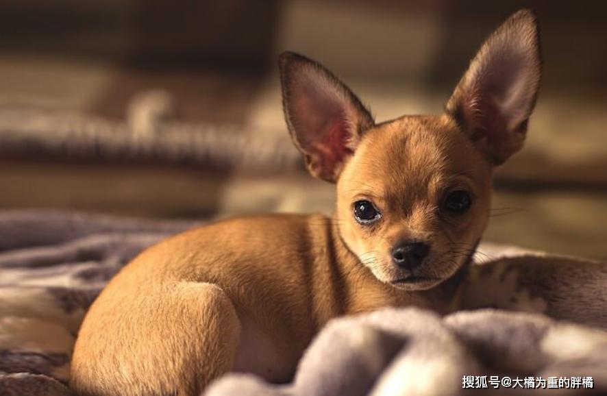 """原创 男子被居家隔离,却让爱犬为他跑腿""""买薯片"""",这狗子也太懂事了"""