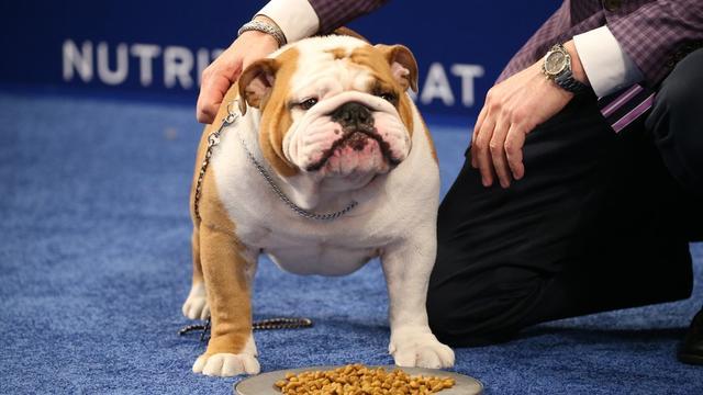 """原创 8大""""最温顺""""的狗狗,你家汪星人上榜了吗?"""