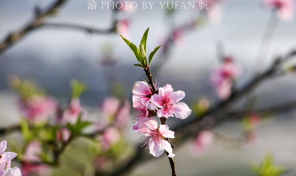 三月三去爬山,重庆潼南桃花山,比印象中差太远,唯远眺让人惊喜