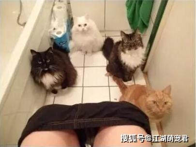 """原创 有养猫和没养猫的区别,扎心了,天天都让我""""刷新三观"""