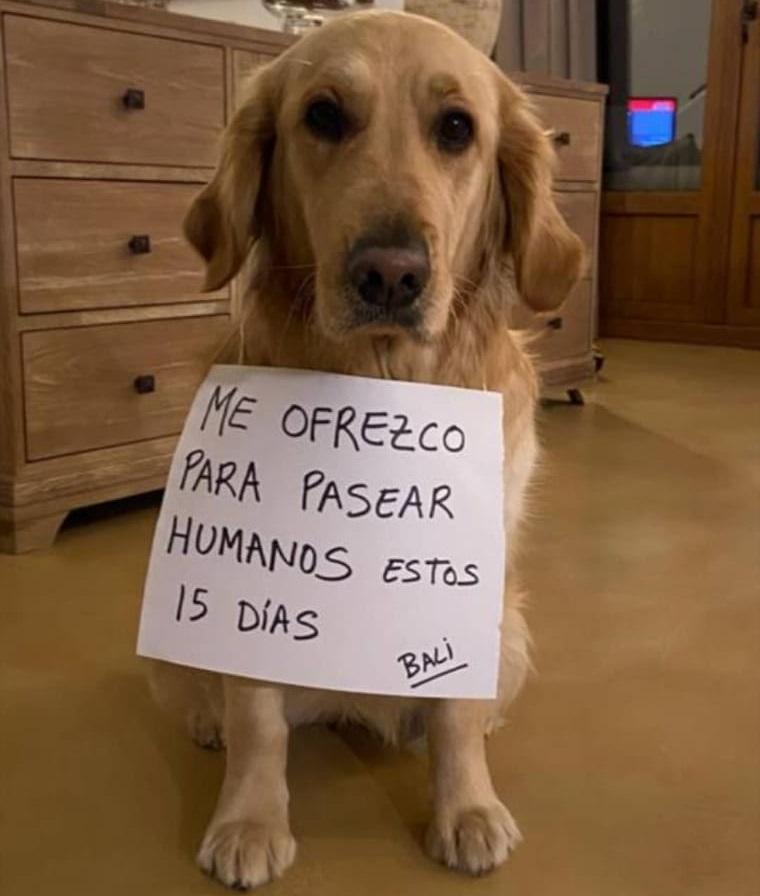 疫情期遛狗走红的西班牙:宠物比儿童数量还多,67%人把宠物当孩子养