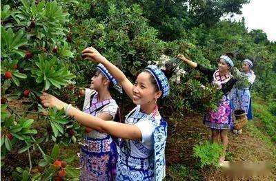 正式公布!贵州这361个家庭农场成省级示范,你家乡有几个?