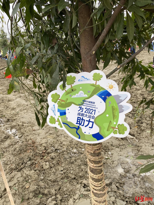 """成都锦城公园新增一抹""""大运绿"""""""