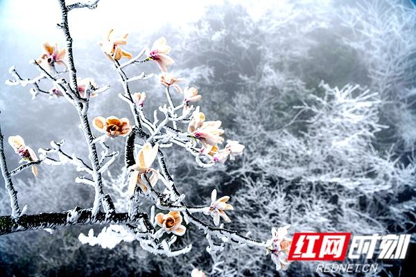 变身偶像公主中文版组图 | 天门山的3月,再现冰