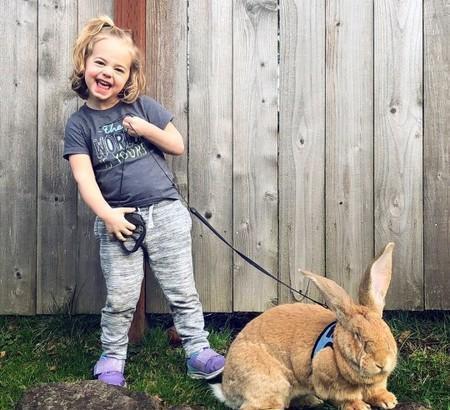 原创 小女孩养着一巨型宠物,仍在发育中就8公斤,超大只兔兔对你卖萌