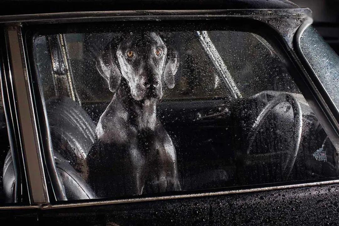 攝影|留在車上的狗狗