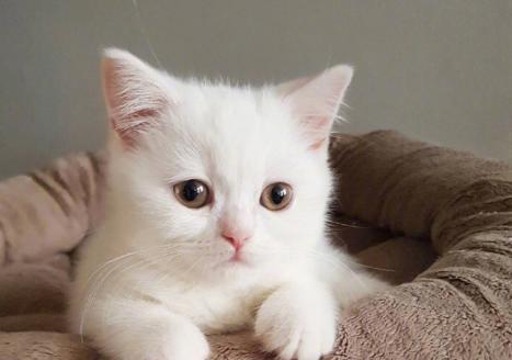 主人出门忘了给小奶猫喂食 回来时被可怜相萌翻了 我错了小猫咪